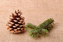 Pine cone on sackcloth background Stock Images