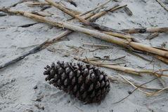Pine Cone on the sand Royalty Free Stock Images