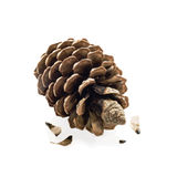 Pine cone and seeds isolated Royalty Free Stock Photo