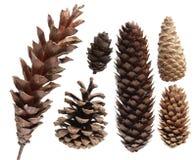 Pine Cone Set Stock Photo
