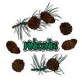 Pine cone set. Stock Photos