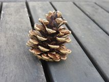 Pine cone. Single pine cone in autumn Royalty Free Stock Image