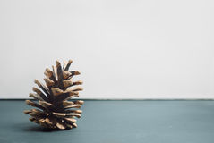 Pine cone single. Single pine cone and few empty space Royalty Free Stock Photos