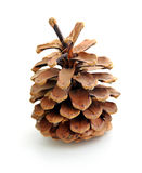 Pine Cone. Single pine tree cone isolated on a white background Stock Image