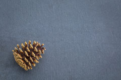Pine cone on slate stone Royalty Free Stock Images