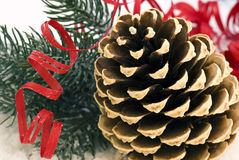 Pine cone in Snow. Pine cone and fir green as closeup in snow  as winter decoration Stock Photos