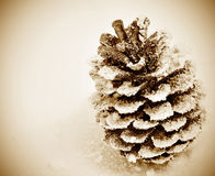 Pine cone on the snow Royalty Free Stock Photography