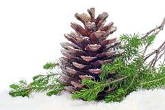 Pine cone on the snow Stock Photos