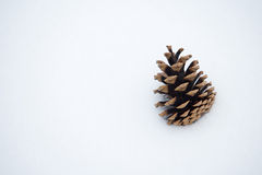 Pine cone in snow Royalty Free Stock Photos