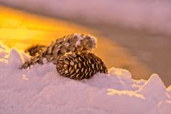 Pine Cone on Snow - Macro Photography.  Royalty Free Stock Photography