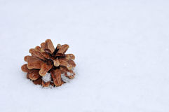 Pine cone in snow outdoor. New year concept. Pine cone in the snow outdoor. New year concept Stock Image