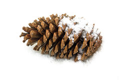 Pine cone in the snow. Pinecone in the snow, close u of christmas decoration Royalty Free Stock Image