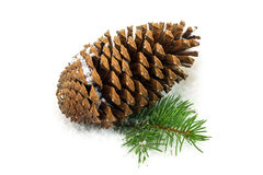 Pine cone in the snow. Pinecone in the snow, close u of christmas decoration Royalty Free Stock Photo