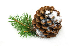 Pine cone in the snow. Pinecone in the snow, close u of christmas decoration Royalty Free Stock Photography