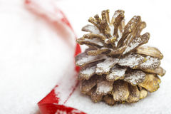 Pine cone on the snow. With a ribbon Stock Photos