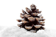 Pine cone on the snow Stock Image