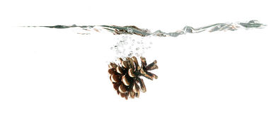 Pine cone splash on water, isolated on white background royalty free stock photos