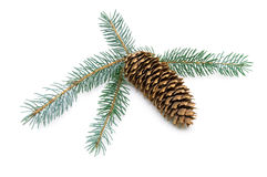 Pine cone and spruce branches isolated on white background Stock Photos