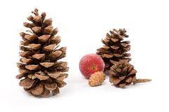 Pine Cone and sugared Fruit Royalty Free Stock Photos