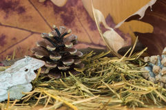 Pine cone surrounded by autumn dried fir and maple leaves Royalty Free Stock Photography