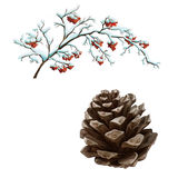 Pine cone and tree with berries isolated on white Royalty Free Stock Photo