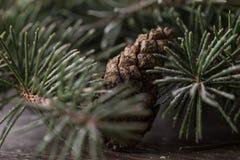 Pine cone tree snow macro Royalty Free Stock Image