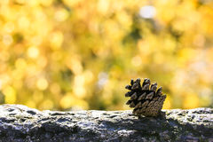 Pine cone on a tree stump with yellow bokeh background Stock Photography