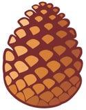 Pine cone. Pine tree cone, pine cone symbol Royalty Free Stock Photography
