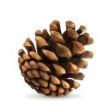 Pine cone vector illustration Stock Image