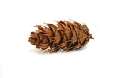 Pine cone on white background Royalty Free Stock Photos