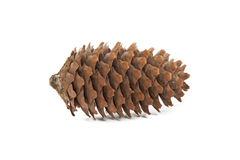 Pine cone on white background. Stock Photo
