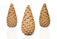 Pine-cone on a white background Stock Photo