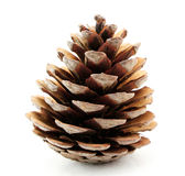 Pine cone. On white background Royalty Free Stock Photography