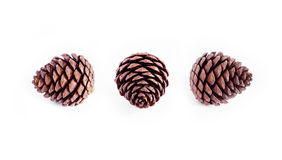 Pine cone with white background Stock Images