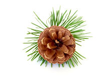 Pine cone on white stock photos