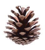 Pine cone. On white background Royalty Free Stock Photos