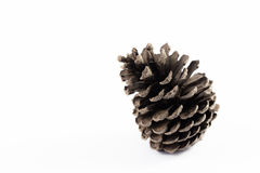 Pine cone on white background Stock Photography