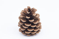 Pine cone on white background. Image shows a pine cone isolated on white stock images