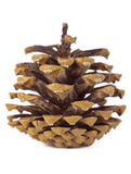 Pine cone on white. Brown pine cone over on white background Stock Photos