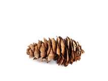 Pine cone. On a white isolated background Stock Photo