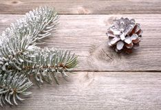 Pine cone and white spruce branch Royalty Free Stock Images