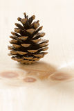 Pine Cone on Wood Royalty Free Stock Photos