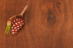 The pine cone on the wood Stock Images