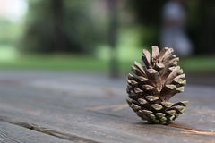 Pine cone on wood table Royalty Free Stock Photos