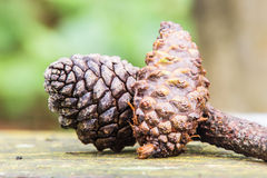 Pine cone on wooden table Royalty Free Stock Images