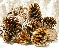 Pine Cones. Are sprinkled by white snow stock image