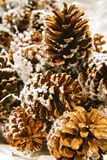 Pine Cones. Are sprinkled by white snow stock images