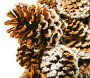 Pine Cones. Are sprinkled by white snow royalty free stock images