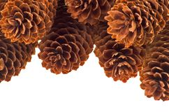 Pine cones. Isolated on white close up Royalty Free Stock Photography