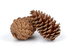 Pine Cones. Two large pine cones isolated on a white background Royalty Free Stock Image